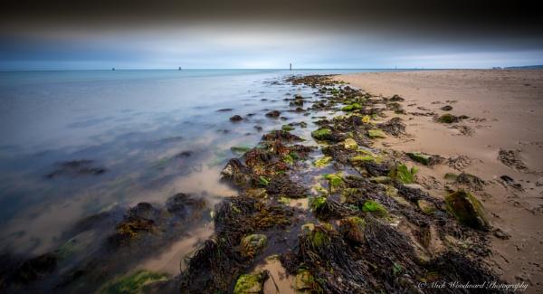 Seaweed by kojak
