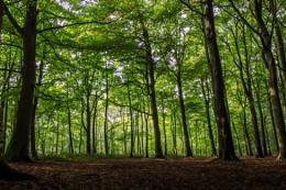 Melton Wood
