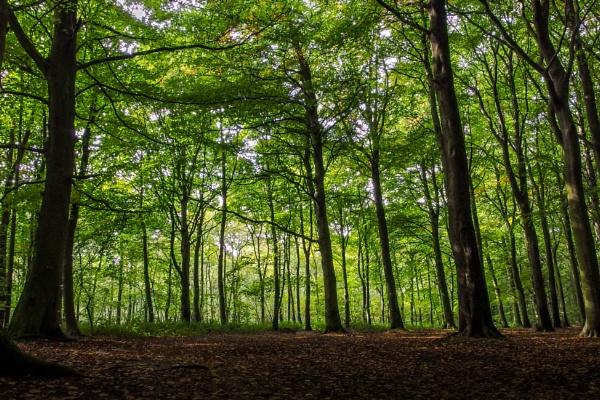 Melton Wood by rickhanson