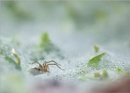 Funnelweb Spider by taggart