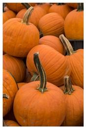 Choose Your Pumpkin !
