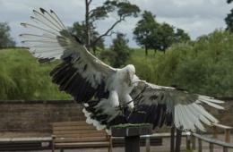 Landing For Lunch