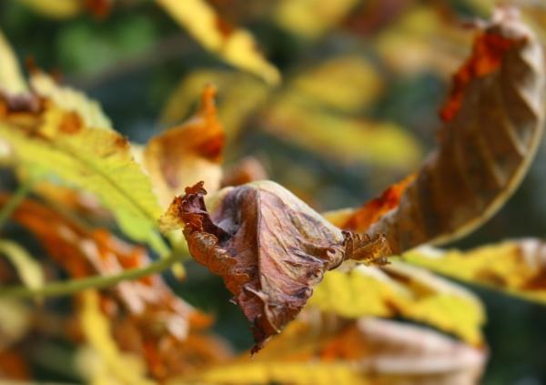 Autumn Leaves by IreneClarke