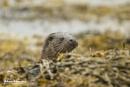 European Otter by AH1shot