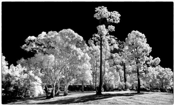 Trees by BarryBeckham