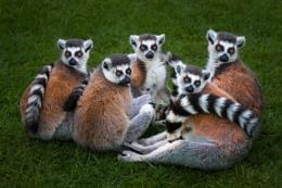 The Lemur Group