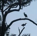 Egrets in shadow