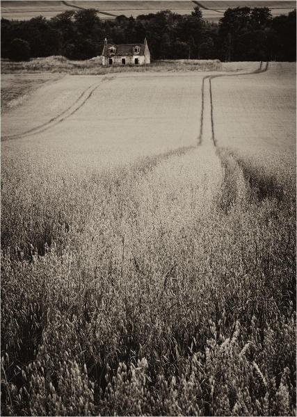 Field Lines by MalcolmM