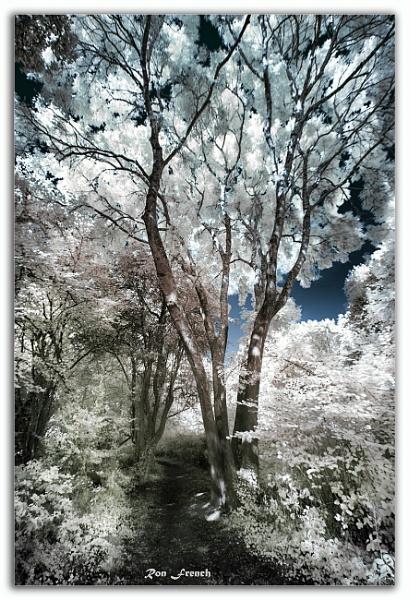 Tree IR by frenchie44