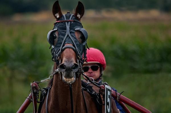 Horse Face by Zydeco_Joe