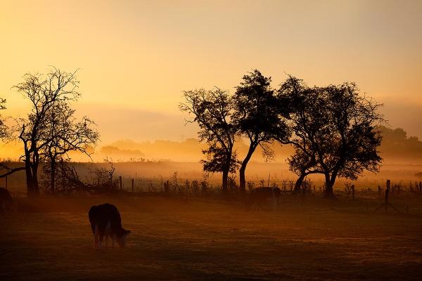 Morning Mist by mpnuttall