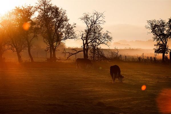 Morning Mist II by mpnuttall