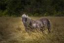 The Pony by Daisymaye