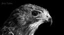 Living Raptor by jeronius