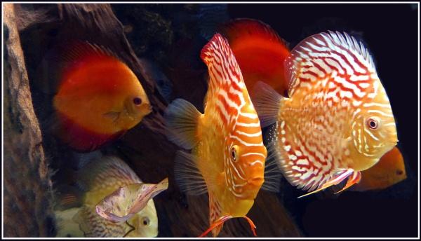 MARINE FISH by basilr