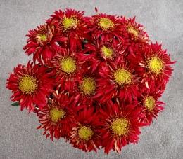 Chrysanthemum, Raymond Mounsey.