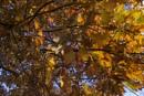 Autumnal Colour from Hawkshead by Irishkate