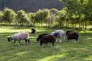 Lakeland Sheep by Irishkate