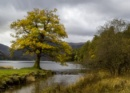 Buttermere Gold by Irishkate