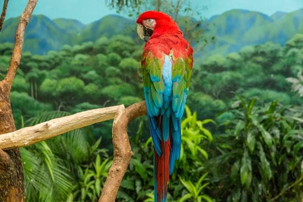 Pretty Bird by ShotfromaCanon