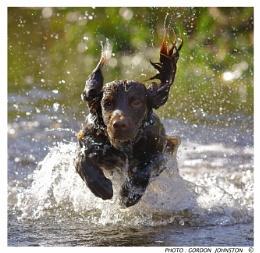 Dyson Dog