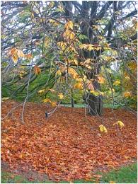 Autumn at Botanic Garden Edinburgh