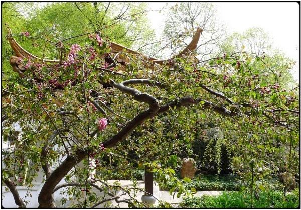 chinese garden by FabioKeiner