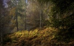 Loch Tummel Autumnal...