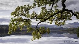 An Oak, a Loch & a Ben...