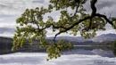 An Oak, a Loch & a Ben... by Scottishlandscapes