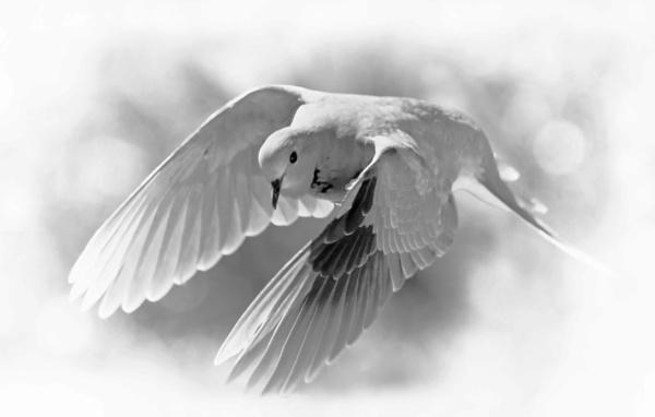 Wings B&W by fotobee