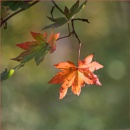 Autumn 1 by taggart