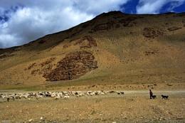 Taglangla La Pass,Leh -Manali Highway [India] 11