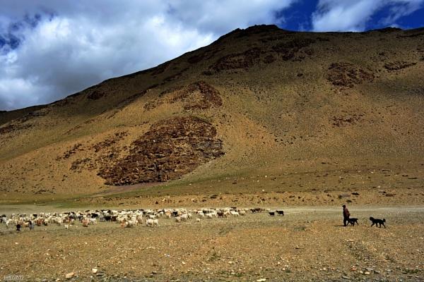 Taglangla La Pass,Leh -Manali Highway [India] 11 by Bantu