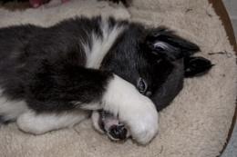 Sleepy now