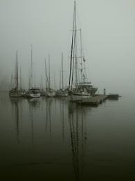 Photo : Foggy Tejo