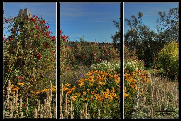 The Gertrude Jekyll Garden, Holy Island by canoncarol