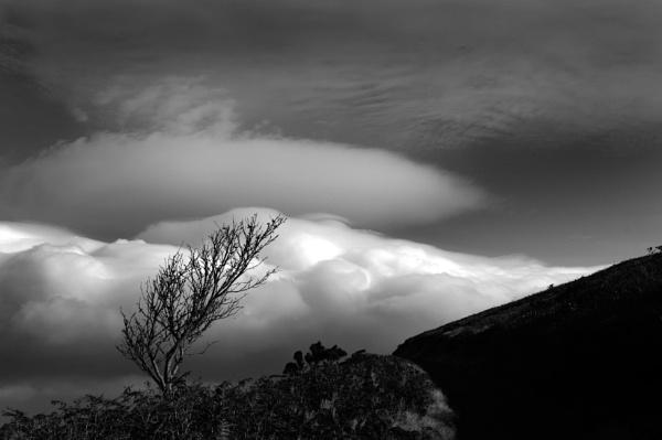 Heddon Valley tree by paultee