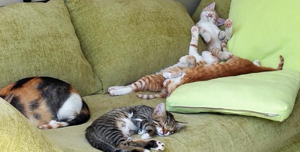 Cat nap! by Suzie69