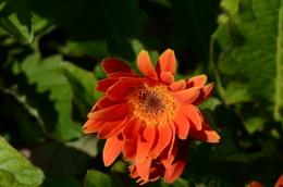 Organge flower bud macro