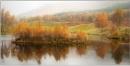 Autumn Birches by MalcolmM