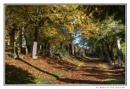 Woodside Cemetery by digital_boi