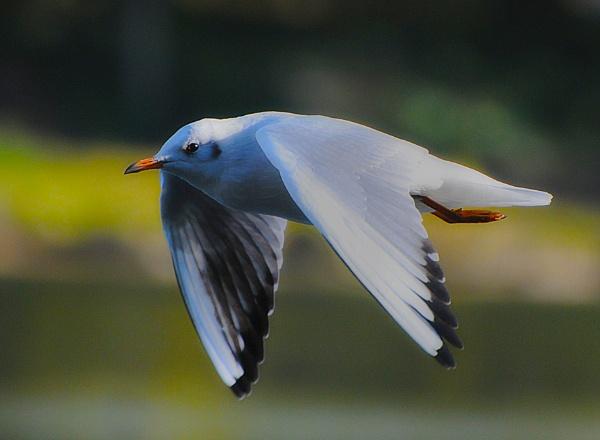 FlyBy by chensuriashi
