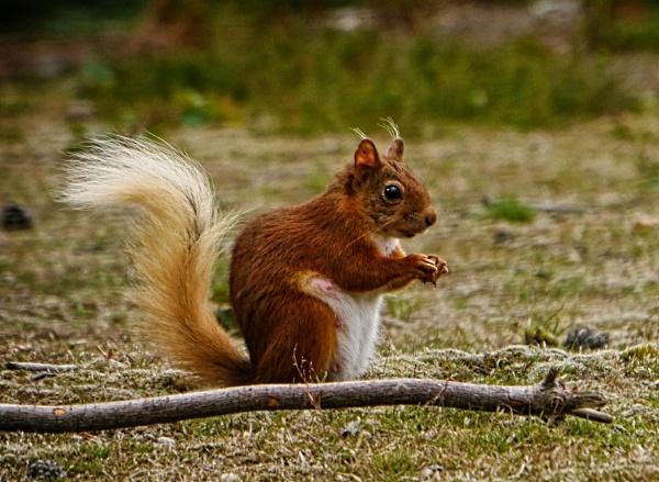 Aw Nuts by Kurt42