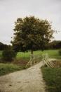 Tree bridge by Jat_Riski