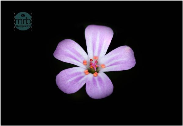 Little flower by blain25