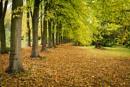 Autumn Colour by jasonrwl