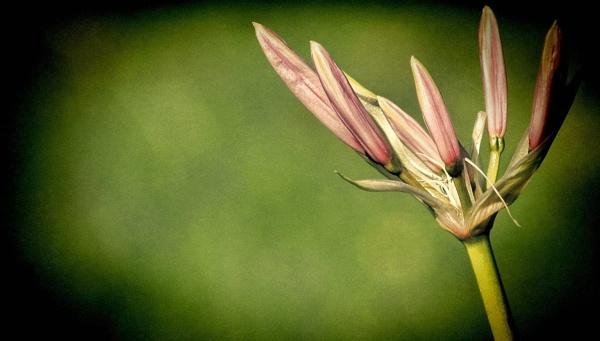 Flower. by NotLostinFrance