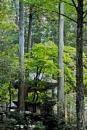 Eiheiji Temple grounds (0407) by paulknight