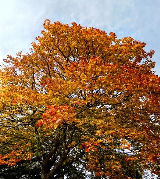 Autumn on Clapham Common London 2 by StevenBest